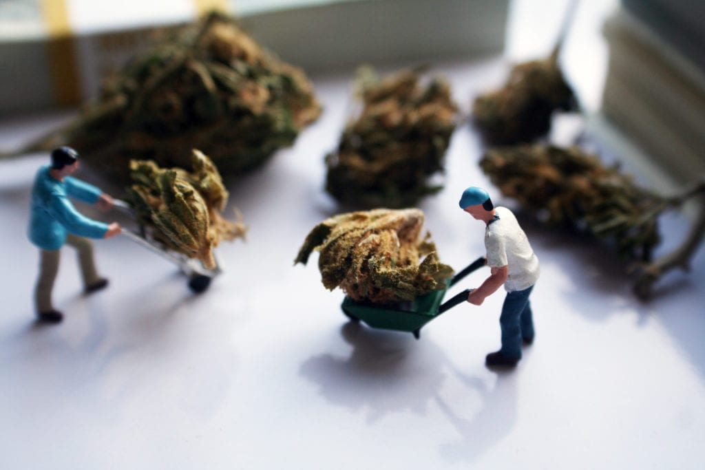 Cannabis Industry Consultants